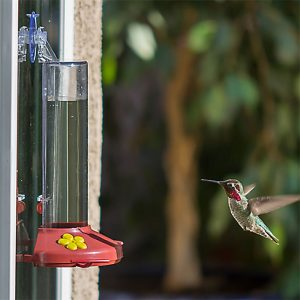 Perky Pet Window Hummingbird Feeder3